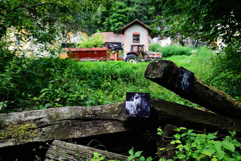 Blaž Janežič Photography Goats repeat F_2